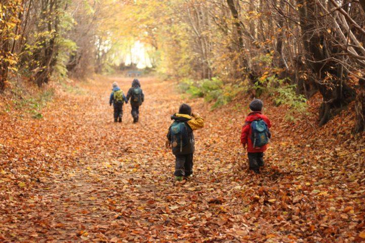 「ドイツの森と子どもたち」 2018年  12月2日(日)・3日(月)・4日(火)  @森林文化アカデミー!