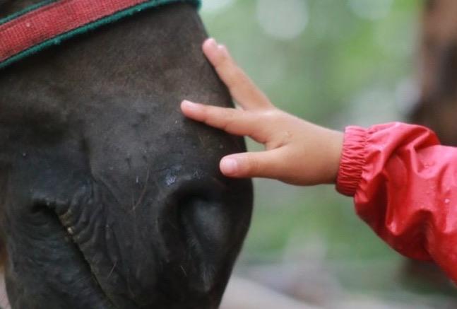 2月1日&2日開催!「第4回 子どもワーカー全国交流フォーラム」〜馬から教わる!?子どもと自分の向き合い方〜@岐阜県立森林文化アカデミー