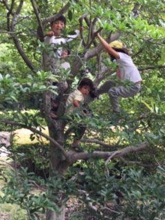 東京都にある「森のようちえん」に対して認可幼稚園と同じ条件での無償化を求めます!