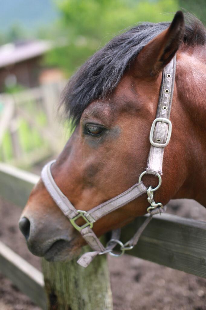 うま森プロジェクト第1弾! はたらく馬を体感しながら考える「森・人・暮らし」
