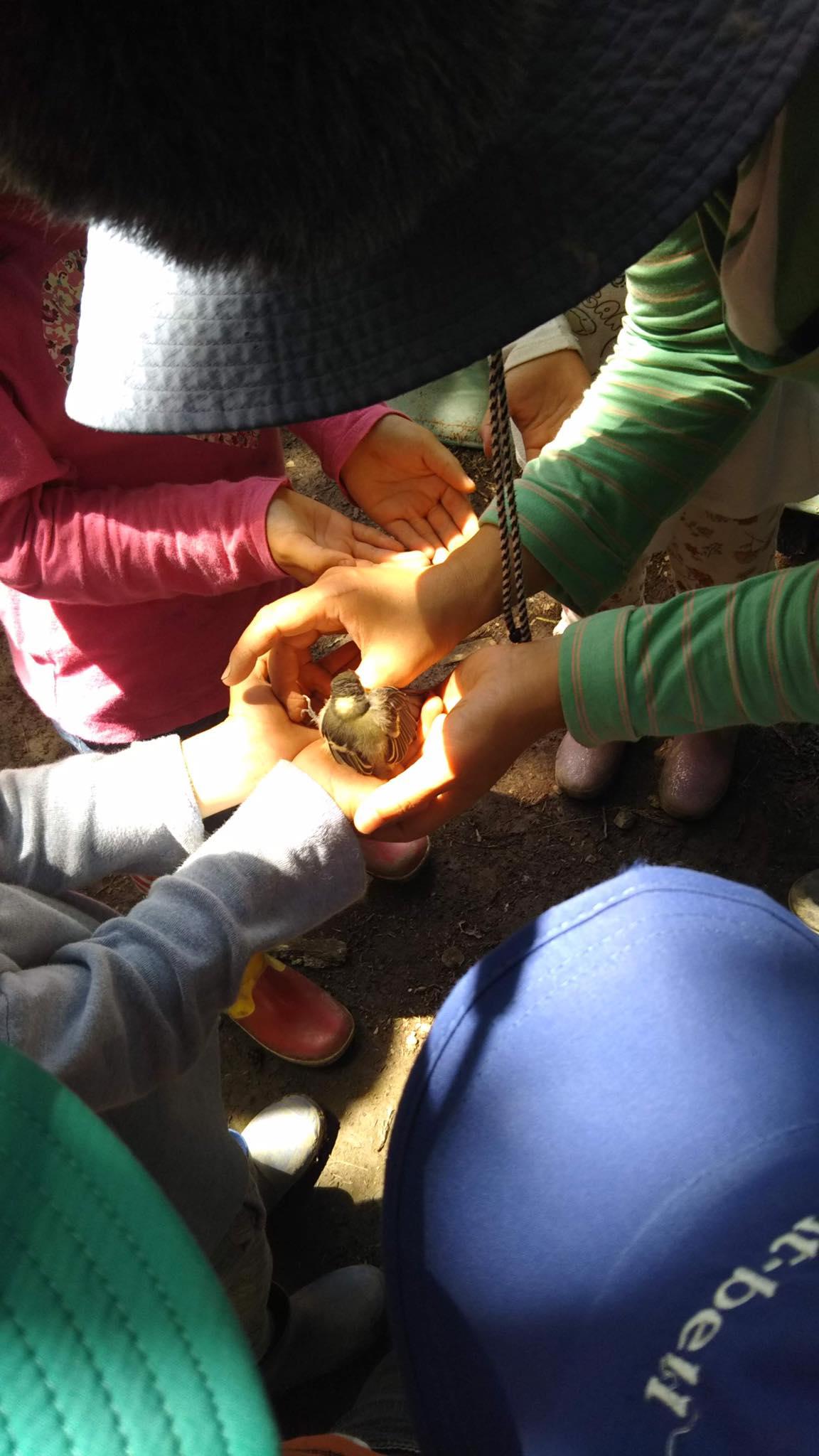 「森で保育しよう!」新潟県上越市 森のようちえん てくてく求人